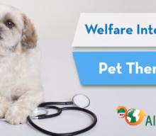 Pet Therapy/ cos'è e come inserirla nel proprio piano di Welfare integrato